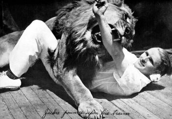 Jackie the Lion playing with trainer